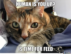 Picture source: http://www.memecenter.com/fun/1898983/cat-alarm-clock