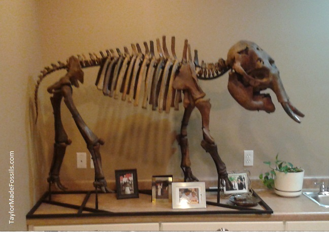baby_mammoth_skeleton_2011_b_text