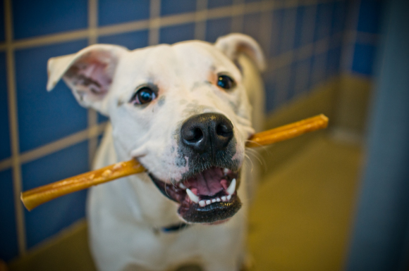 bully-sticks-in-dog-mouth-580x385