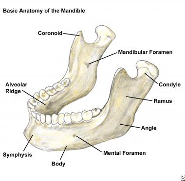 mandible-basic-20087tn