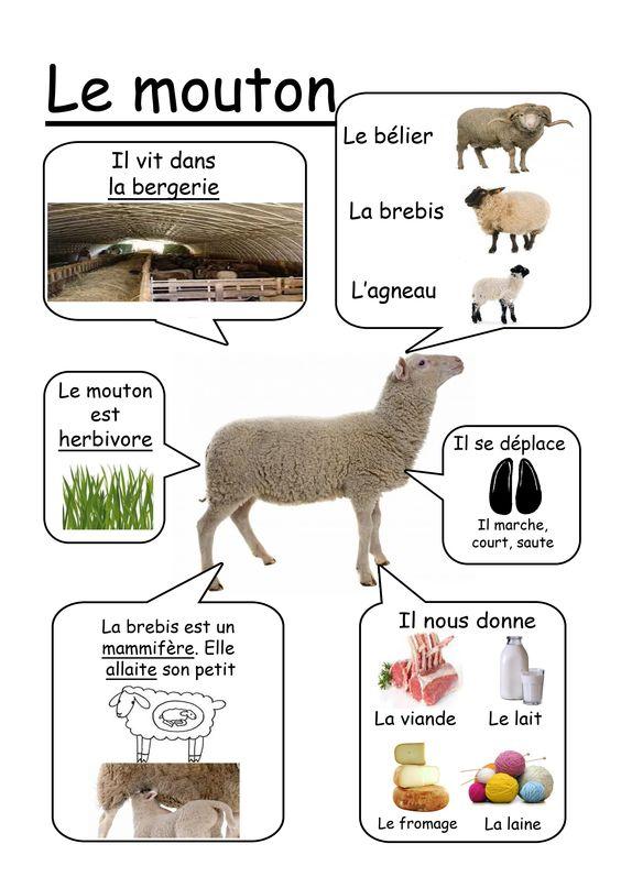 mouton-4dcd26dce04c746ec097f0044d0f047e