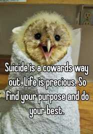 funny-suicide-bird-in-towel-0511e1b66cac534423878a1772c86f6a8ca89d