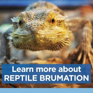 learn more about brumation 6c505dfd5f0942f62981d4f820f09207