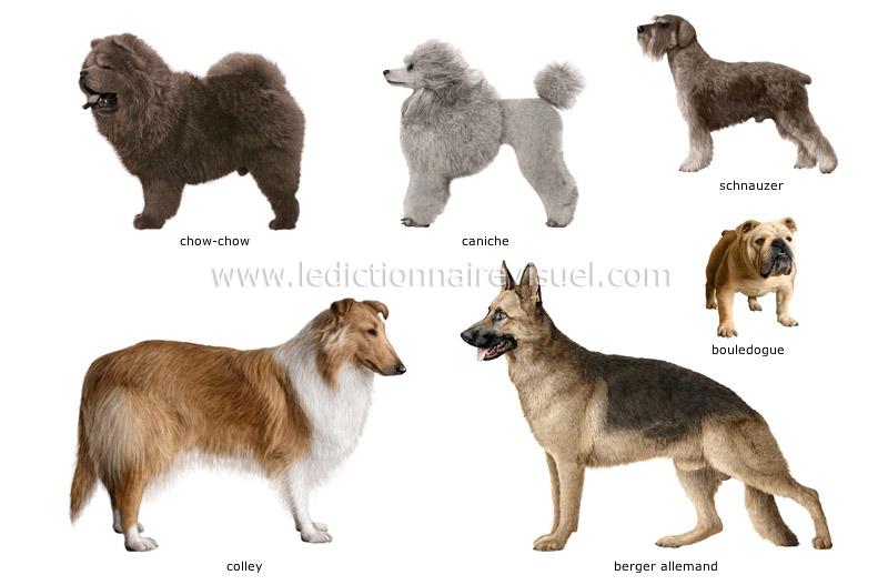races-de-chiens-290540