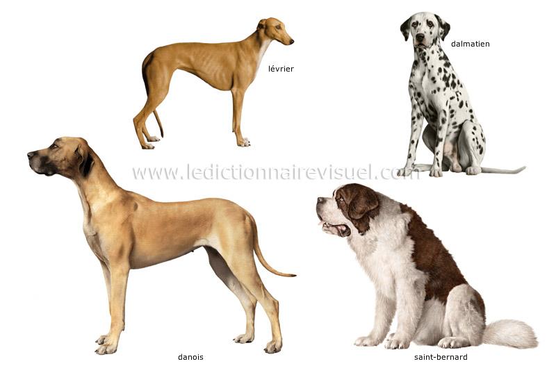 races-de-chiens-290541
