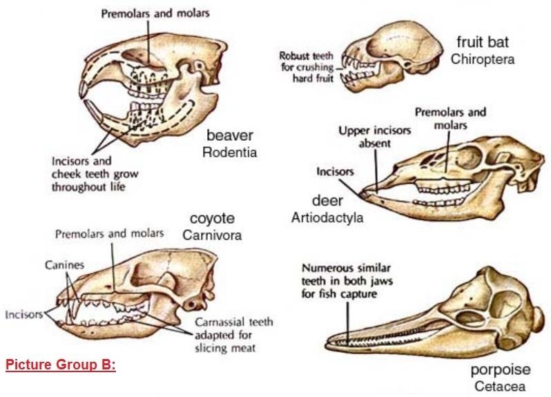 pgb_mammal_teeth_notxt.jpg