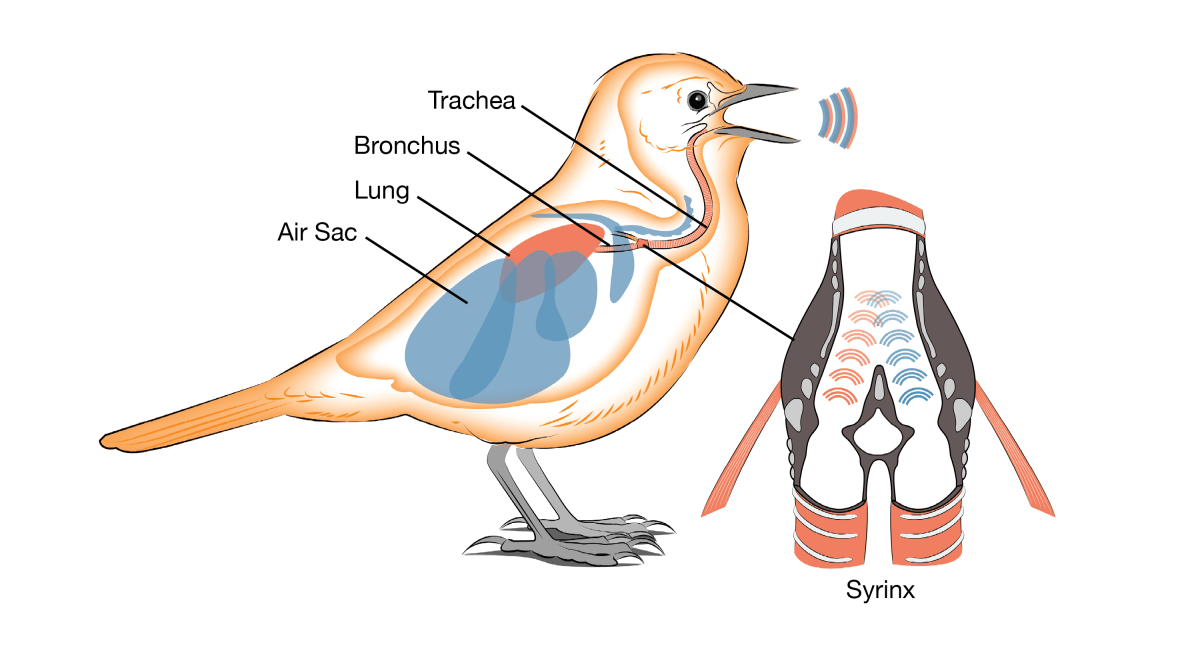 How computational linguists think aboutbirds